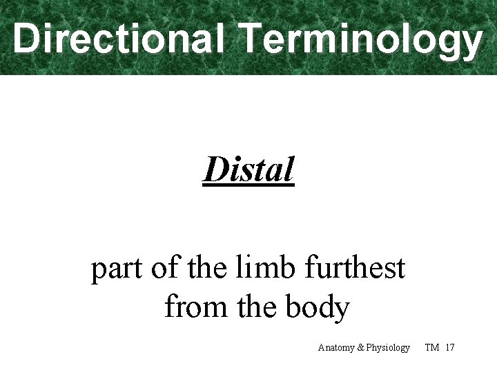 Directional Terminology Distal part of the limb furthest from the body Anatomy & Physiology