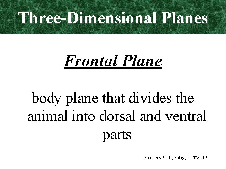 Three-Dimensional Planes Frontal Plane body plane that divides the animal into dorsal and ventral