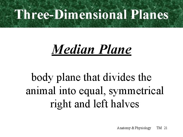 Three-Dimensional Planes Median Plane body plane that divides the animal into equal, symmetrical right