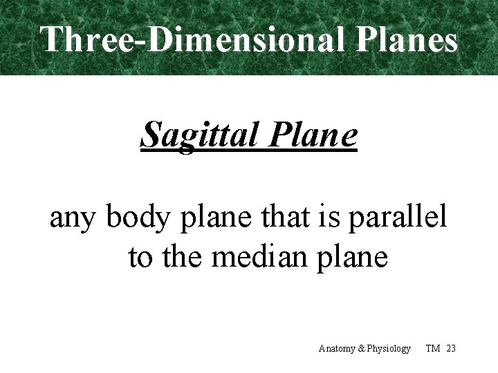 Three-Dimensional Planes Sagittal Plane any body plane that is parallel to the median plane