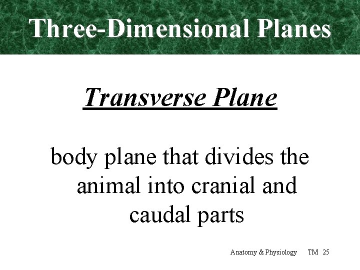 Three-Dimensional Planes Transverse Plane body plane that divides the animal into cranial and caudal