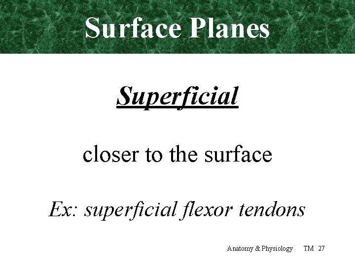 Surface Planes Superficial closer to the surface Ex: superficial flexor tendons Anatomy & Physiology