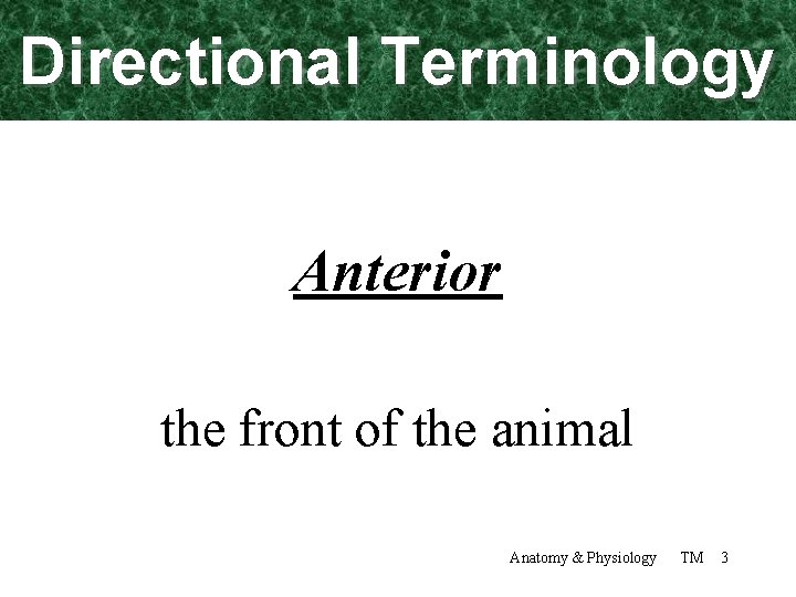 Directional Terminology Anterior the front of the animal Anatomy & Physiology TM 3