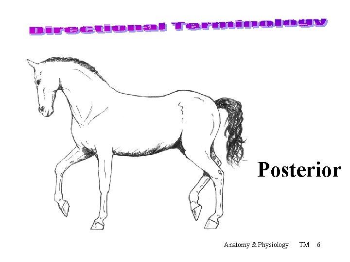 Posterior Anatomy & Physiology TM 6