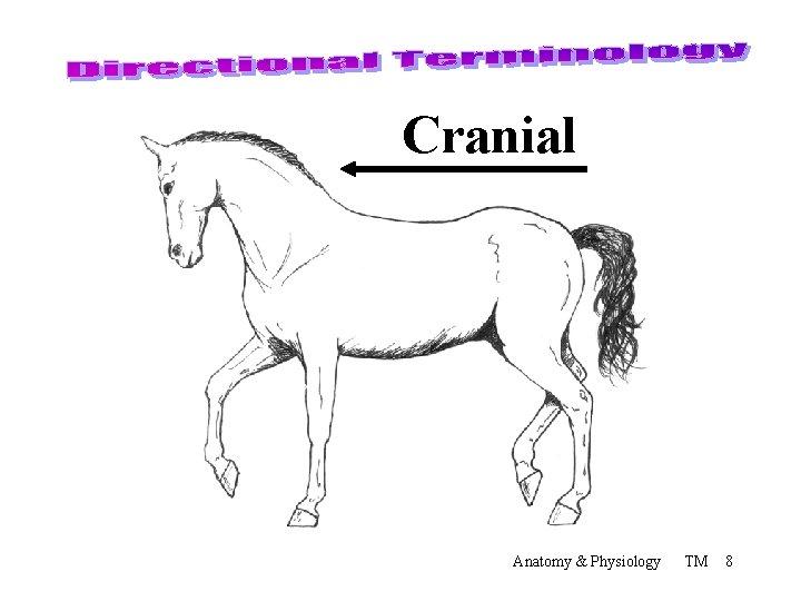 Cranial Anatomy & Physiology TM 8