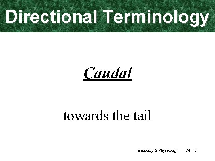 Directional Terminology Caudal towards the tail Anatomy & Physiology TM 9