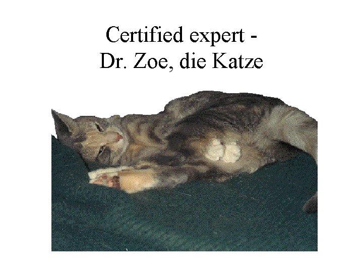 Certified expert Dr. Zoe, die Katze