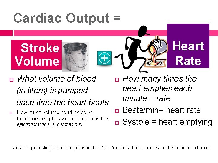 Cardiac Output = Heart Rate Stroke Volume What volume of blood (in liters) is