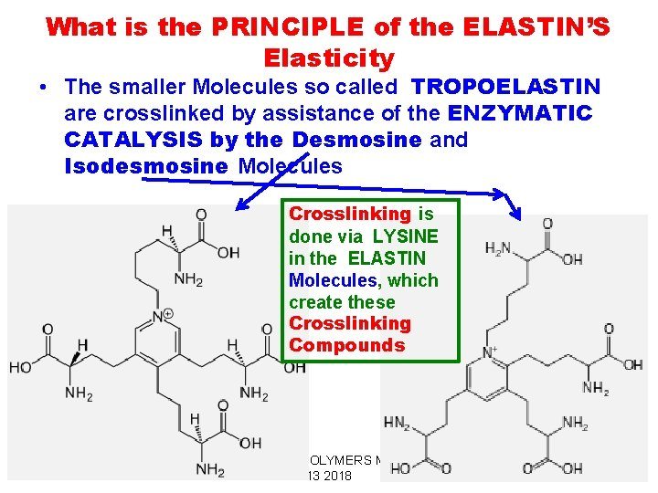 What is the PRINCIPLE of the ELASTIN'S Elasticity • The smaller Molecules so called