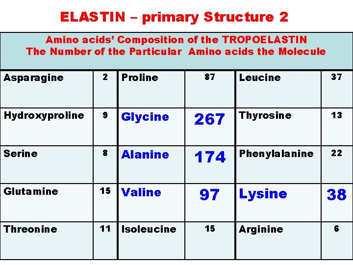 ELASTIN – primary Structure 2 Amino acids' Composition of the TROPOELASTIN The Number of