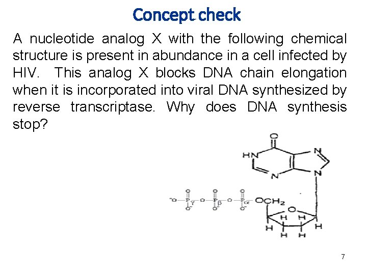 Concept check A nucleotide analog X with the following chemical structure is present in