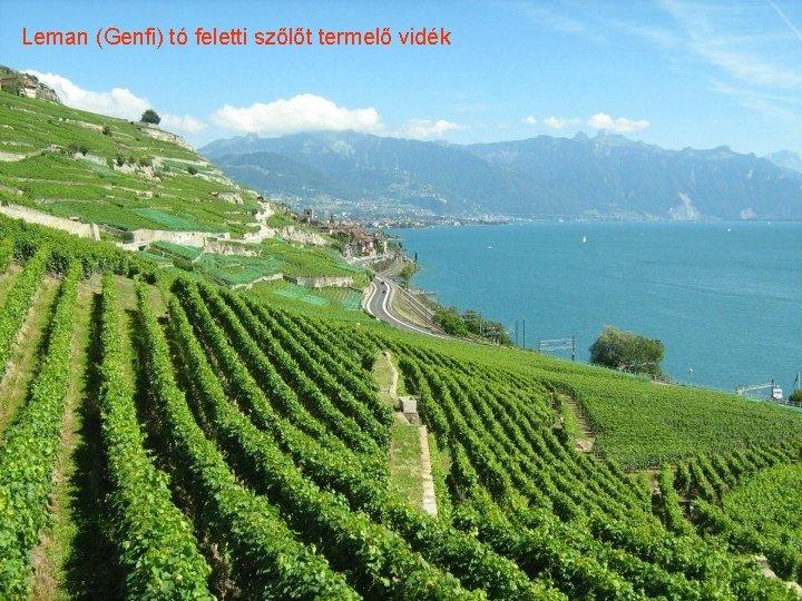Leman (Genfi) tó feletti szőlőt termelő vidék