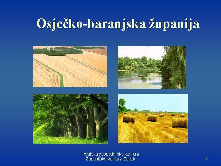 Osječko-baranjska županija Hrvatska gospodarska komora, Županijska komora Osijek 1