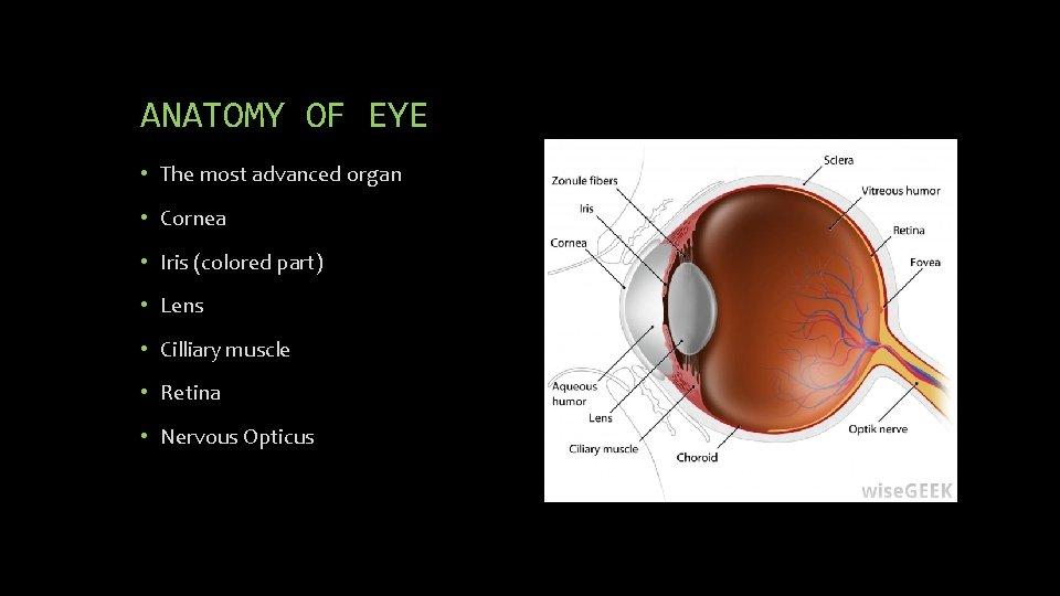 ANATOMY OF EYE • The most advanced organ • Cornea • Iris (colored part)
