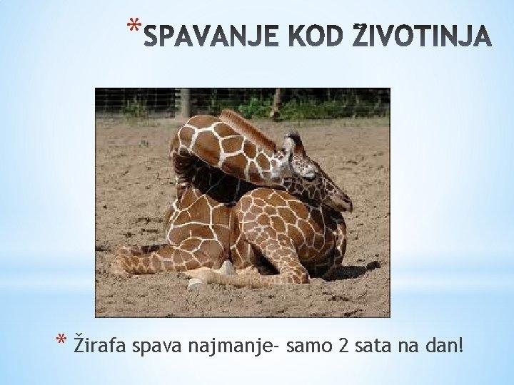 * * Žirafa spava najmanje- samo 2 sata na dan!
