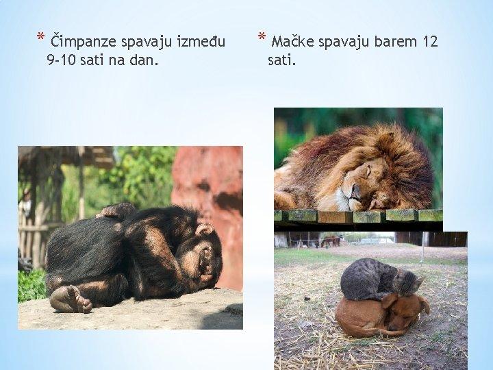 * Čimpanze spavaju između 9 -10 sati na dan. * Mačke spavaju barem 12