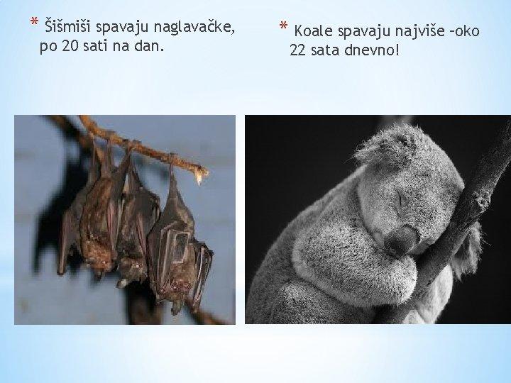 * Šišmiši spavaju naglavačke, po 20 sati na dan. * Koale spavaju najviše –oko