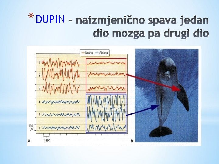 * DUPIN