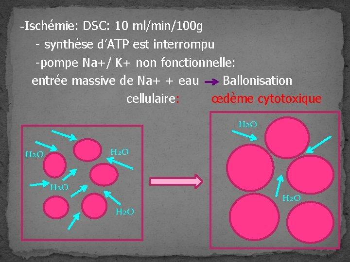 -Ischémie: DSC: 10 ml/min/100 g - synthèse d'ATP est interrompu -pompe Na+/ K+ non