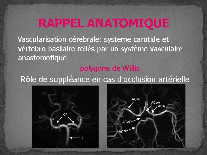 RAPPEL ANATOMIQUE Vascularisation cérébrale: système carotide et vértebro basilaire reliés par un système vasculaire