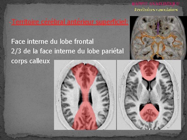 RAPPEL ANATOMIQUE Territoires vasculaires -Territoire cérébral antérieur superficiel: Face interne du lobe frontal 2/3