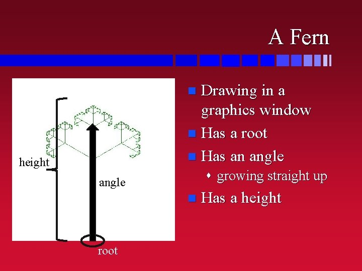 A Fern Drawing in a graphics window n Has a root n Has an