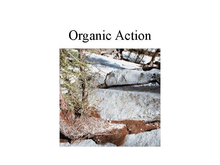 Organic Action
