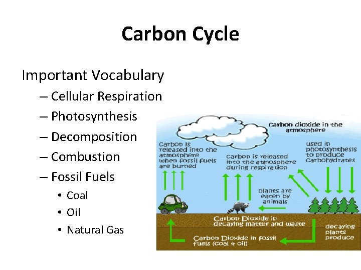 Fuels cycle fossil carbon Carbon Cycle