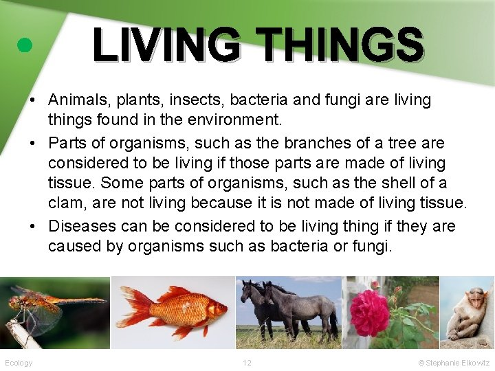 LIVING THINGS • Animals, plants, insects, bacteria and fungi are living things found in