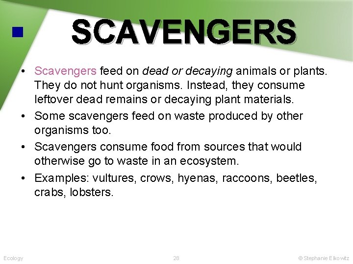 SCAVENGERS • Scavengers feed on dead or decaying animals or plants. They do not