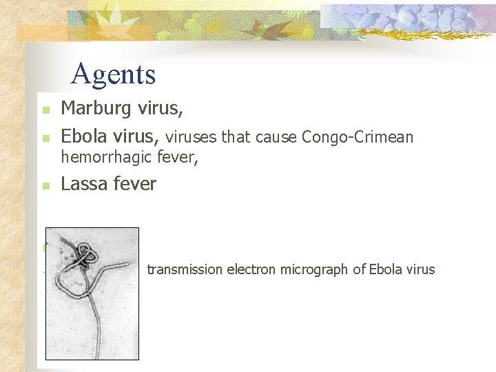 Agents n n Marburg virus, Ebola virus, viruses that cause Congo-Crimean hemorrhagic fever,