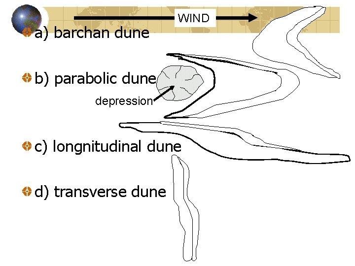 a) barchan dune WIND b) parabolic dune depression c) longnitudinal dune d) transverse dune