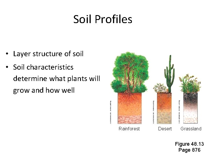 Soil Profiles • Layer structure of soil • Soil characteristics determine what plants will
