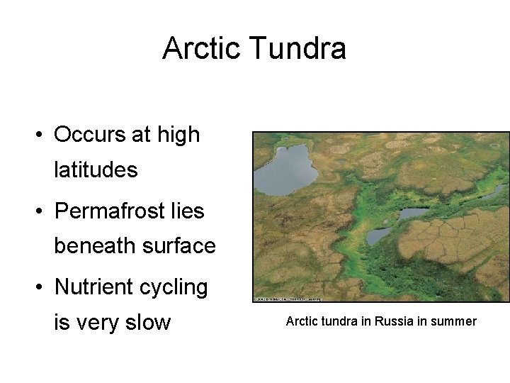 Arctic Tundra • Occurs at high latitudes • Permafrost lies beneath surface • Nutrient