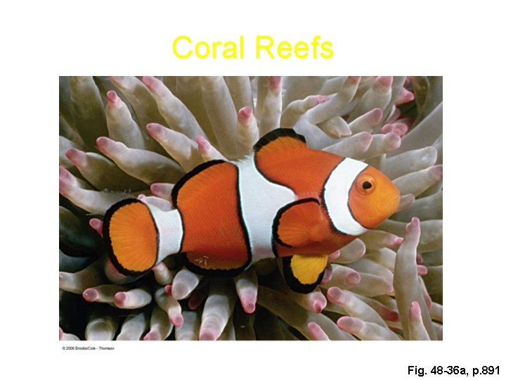 Coral Reefs Fig. 48 -36 a, p. 891