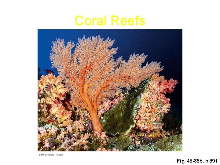 Coral Reefs Fig. 48 -36 b, p. 891