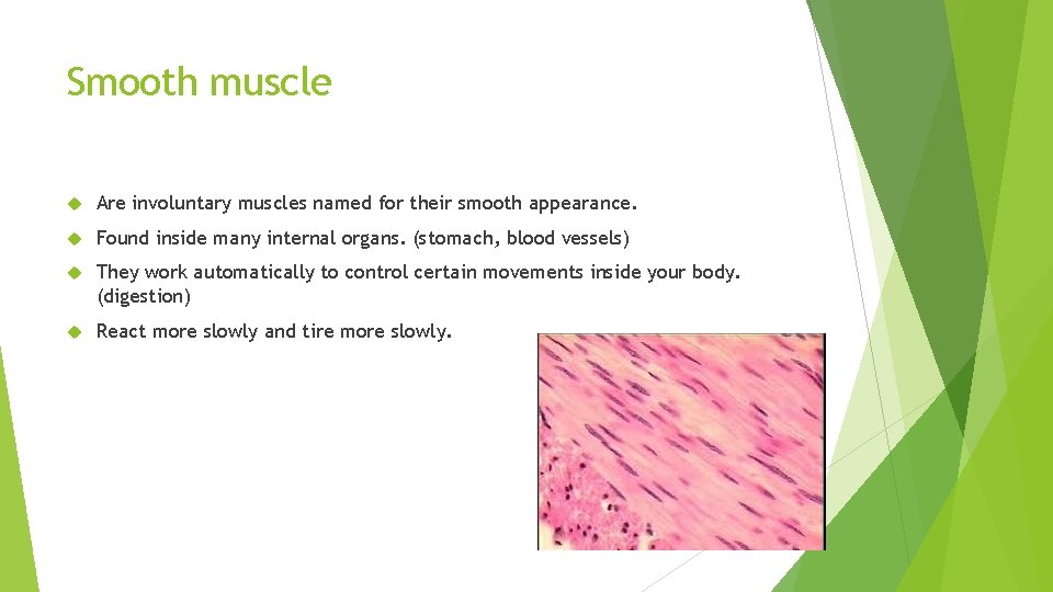 Smooth muscle Are involuntary muscles named for their smooth appearance. Found inside many internal