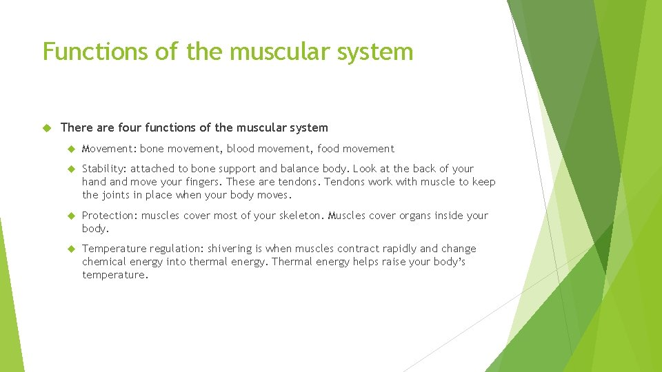 Functions of the muscular system There are four functions of the muscular system Movement: