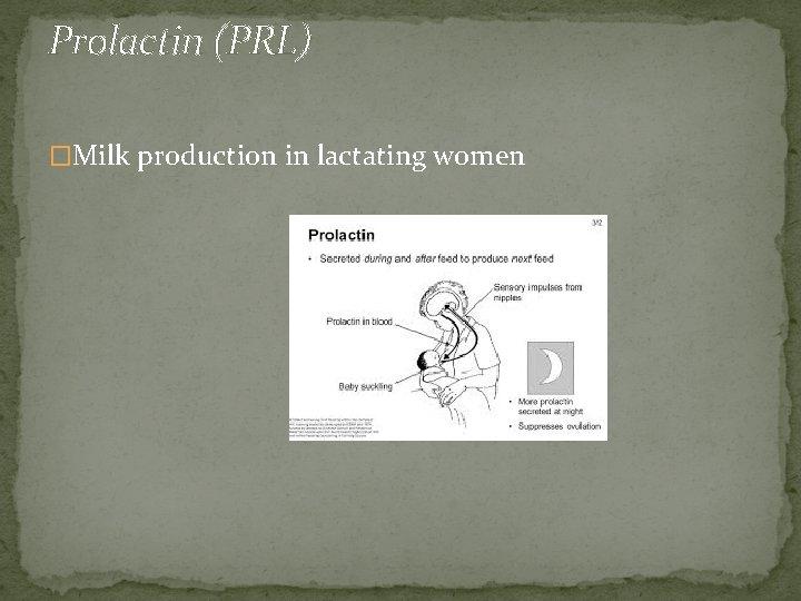 Prolactin (PRL) �Milk production in lactating women