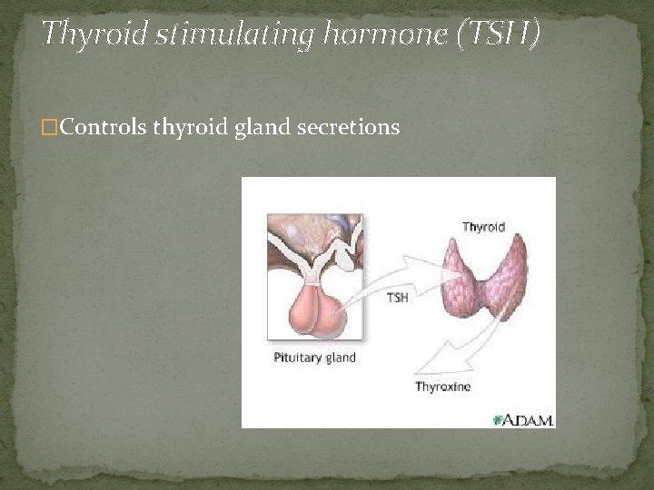 Thyroid stimulating hormone (TSH) �Controls thyroid gland secretions