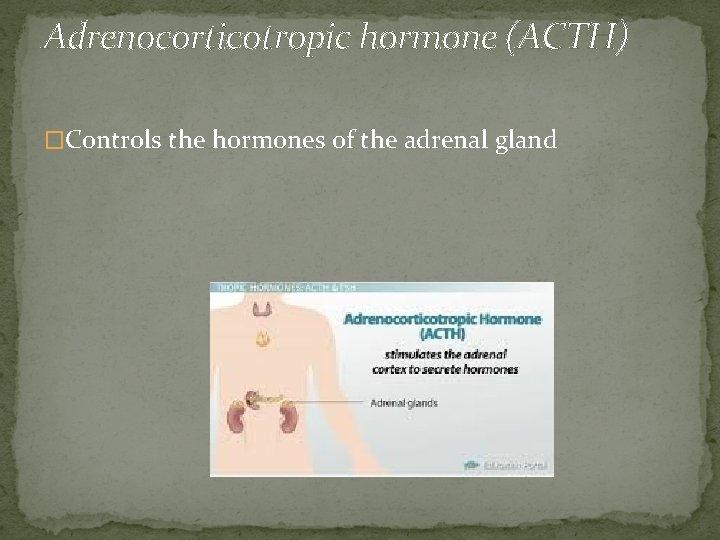 Adrenocorticotropic hormone (ACTH) �Controls the hormones of the adrenal gland