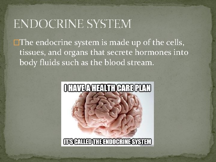 ENDOCRINE SYSTEM �The endocrine system is made up of the cells, tissues, and organs