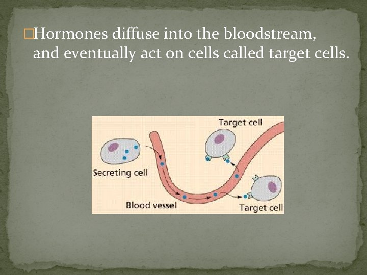 �Hormones diffuse into the bloodstream, and eventually act on cells called target cells.