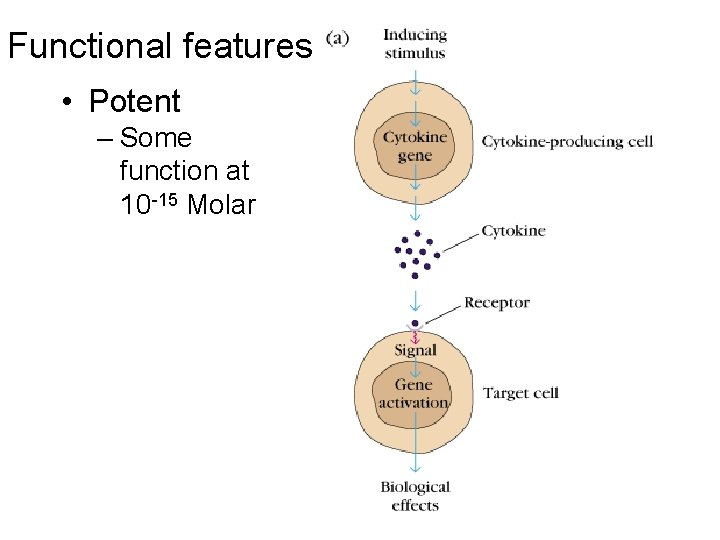 Functional features • Potent – Some function at 10 -15 Molar