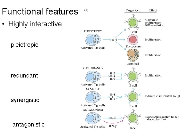 Functional features • Highly interactive pleiotropic redundant synergistic antagonistic