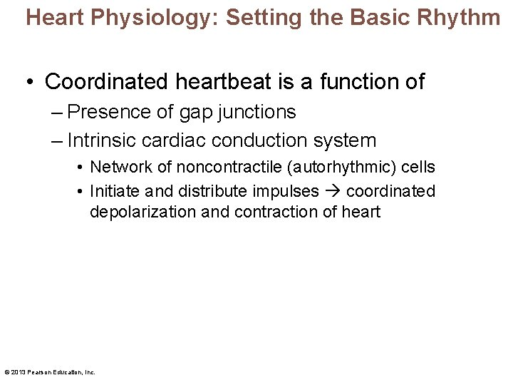 Heart Physiology: Setting the Basic Rhythm • Coordinated heartbeat is a function of –