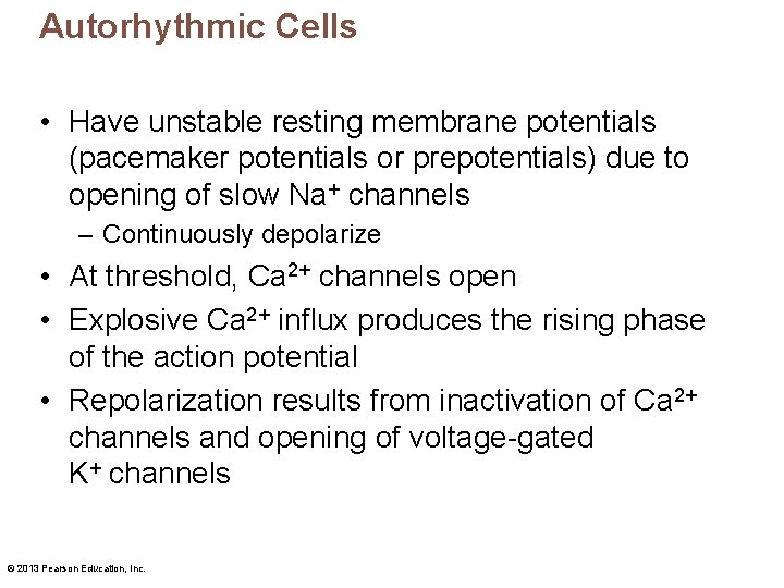 Autorhythmic Cells • Have unstable resting membrane potentials (pacemaker potentials or prepotentials) due to