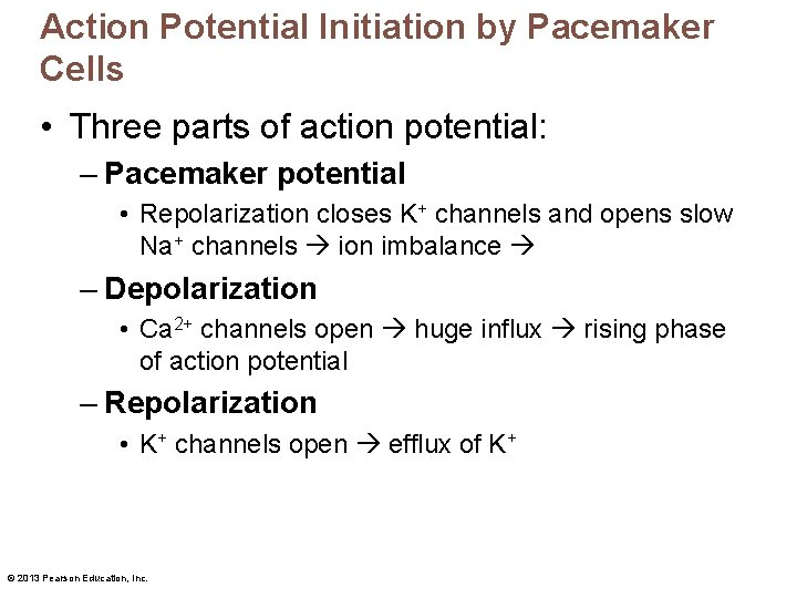 Action Potential Initiation by Pacemaker Cells • Three parts of action potential: – Pacemaker