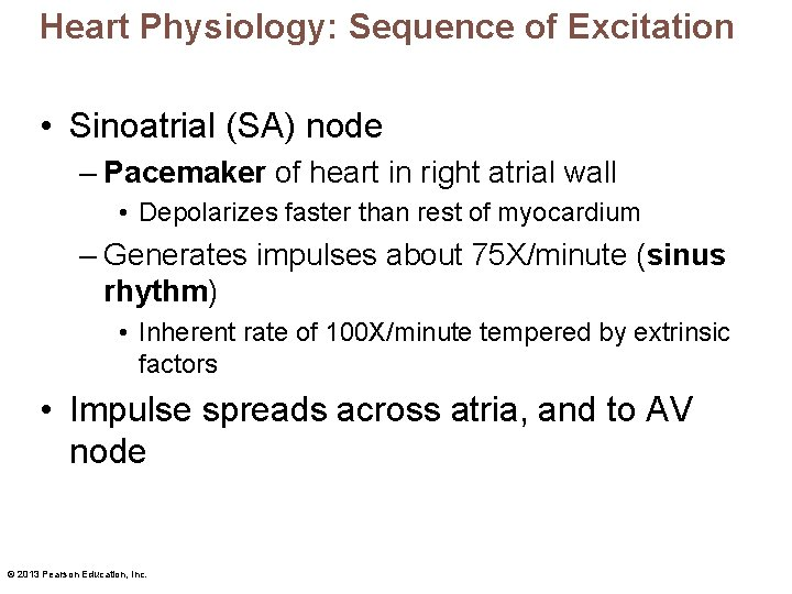 Heart Physiology: Sequence of Excitation • Sinoatrial (SA) node – Pacemaker of heart in