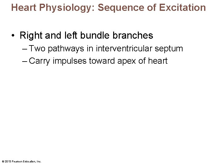 Heart Physiology: Sequence of Excitation • Right and left bundle branches – Two pathways